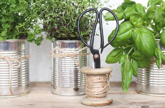 Pesto-Rezept, Kochen mit Kräutern, frische Kräuter, Kräutergarten, Gärtnern, Basilikum, Minze, Thymian