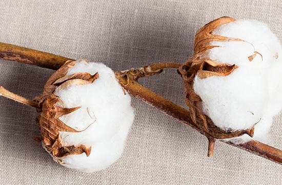 World Cotton Day 2021: Nachhaltige Baumwolle bei Ernsting's family