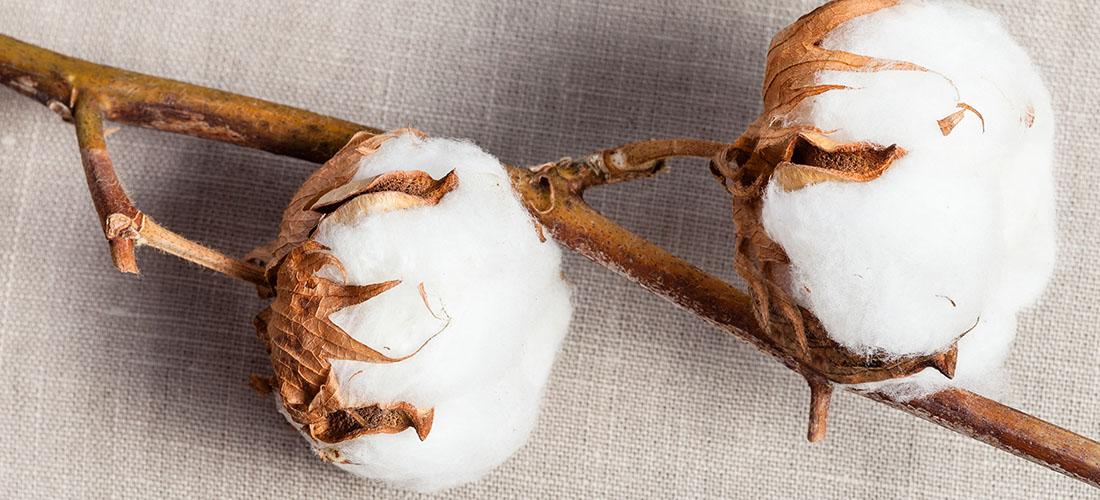 World Cotton Day, nachhaltige Textilien, nachhaltige Baumwolle, Baumwolle, futurefröhlich, future froehlich, Ernsting's family, GOTS, OCS, Cotton made in Africa, Bio-Baumwolle